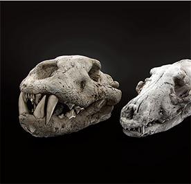 Skulls di Daniele Nofi @ 2014