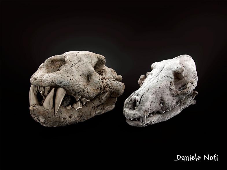 Skulls_large
